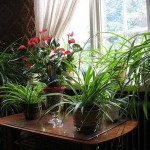 Manfaat Tanaman Dalam Rumah