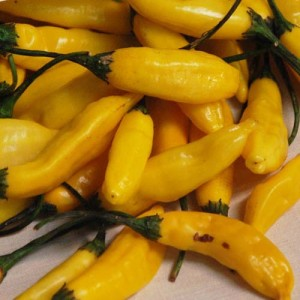 Lemon Drop Pepper – 10 Biji