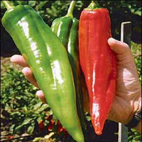 Pepper Hot Numex Big Jim
