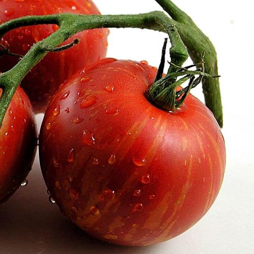 Tomat Tigerella Tomato