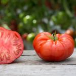 Beefsteak Tomato – 10 Biji