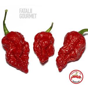 Fatali Gourmet Jigsaw – 5 Biji