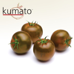 Kumato Tomato – 10 Biji