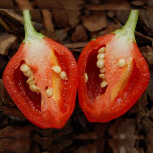 Cabe Inca Berry